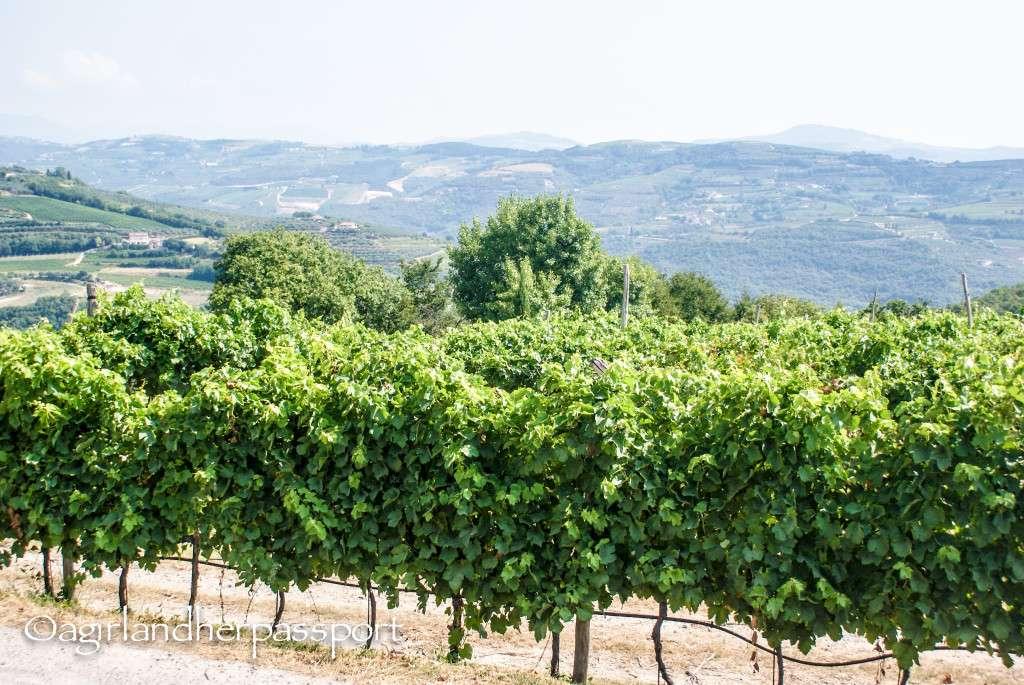 Tenuta Sant'Antonio Winery