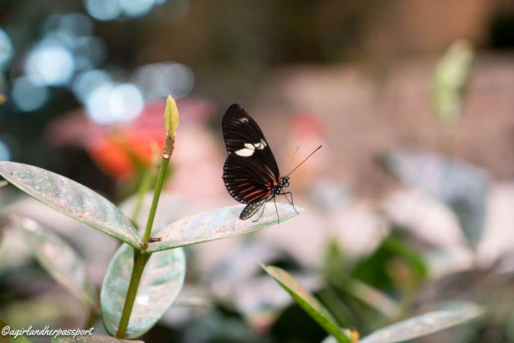 Butterfly Palace