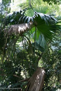 Royal Botanic Gardens Kandy